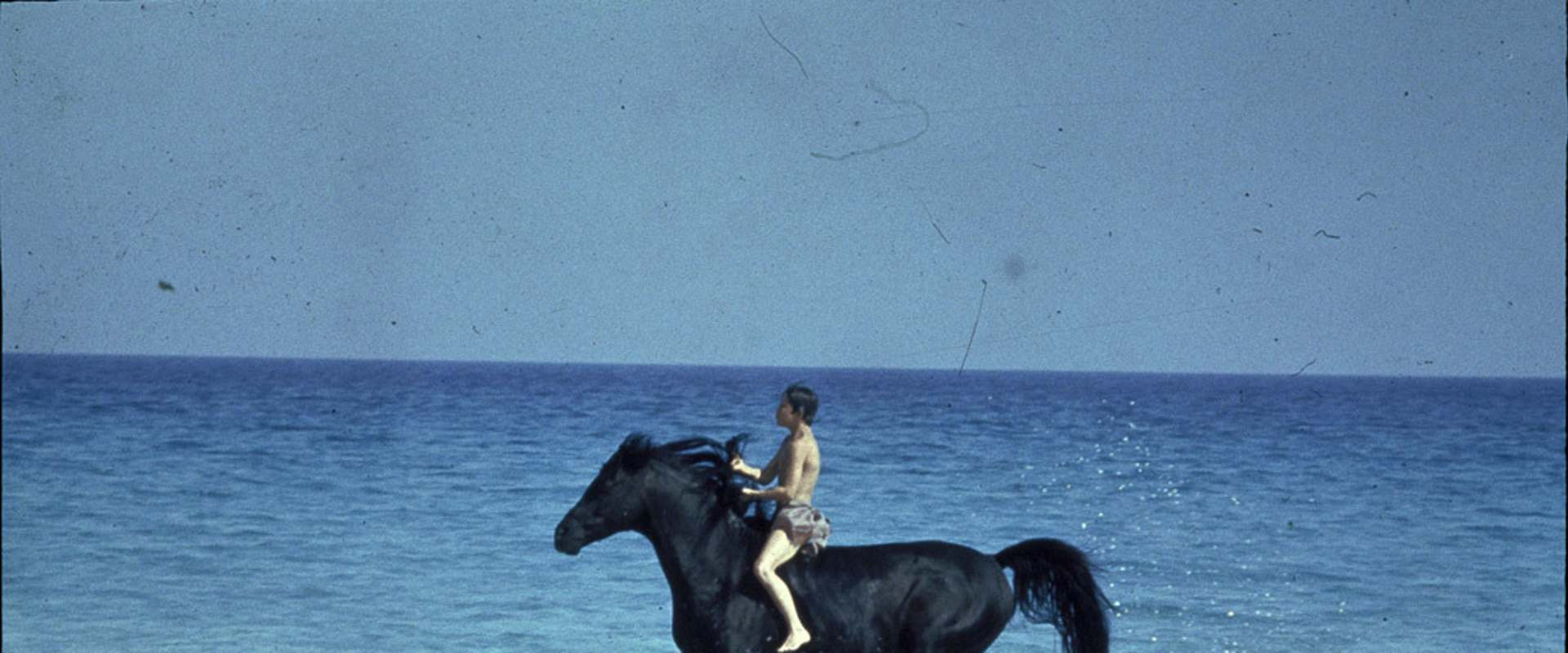 The Black Stallion background 1