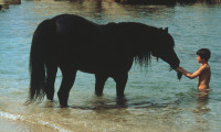 The Black Stallion Movie Still 4